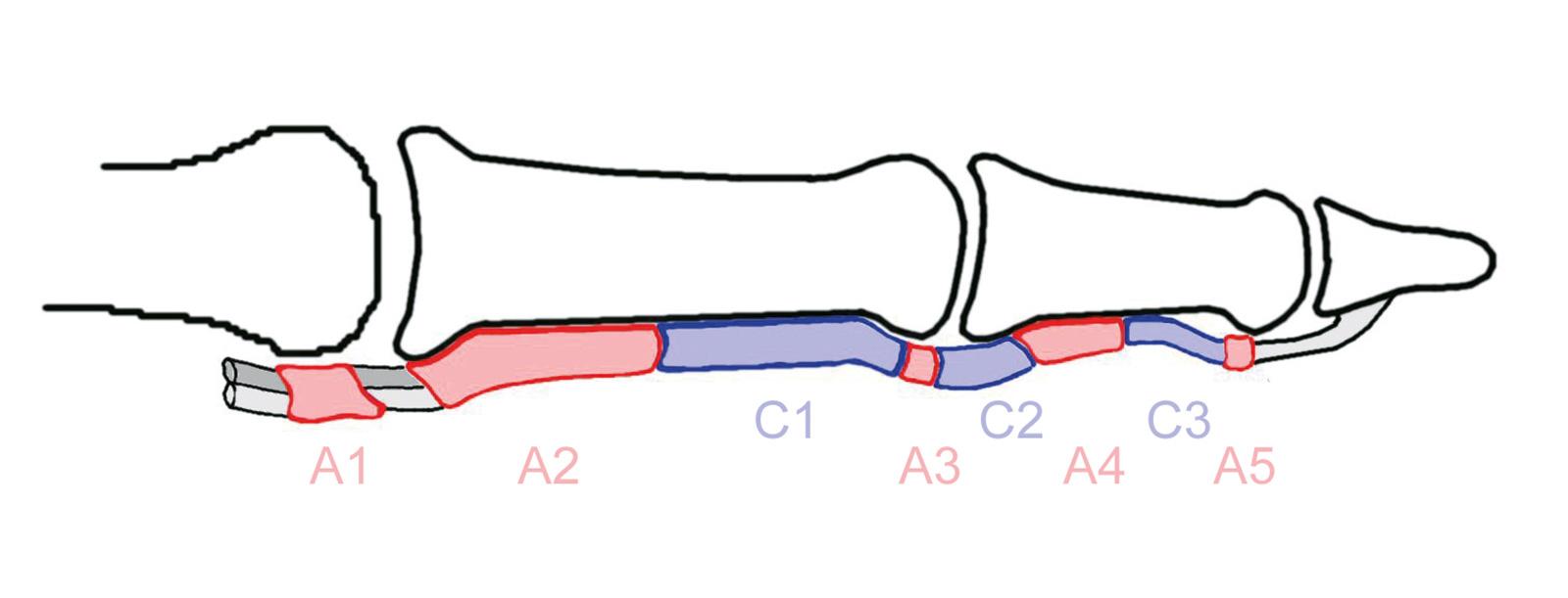Abb. 7-14: Ringbänder A1 bis A5 und C1 bis C3